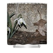 Double Snowdrops Shower Curtain