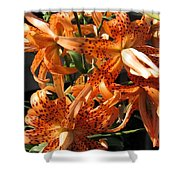 Double Tiger Lily Named Flora Pleno Shower Curtain