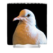 Dovey Shower Curtain