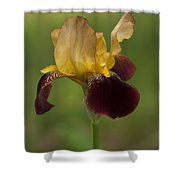 Down Home Two-tone Iris Shower Curtain