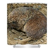 Down Right Dirty Mole Shower Curtain