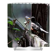 Down The Lane Shower Curtain