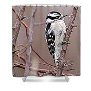 Downy Woodpecker 1 Shower Curtain