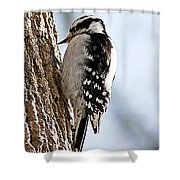 Downy Woodpecker 4 Shower Curtain