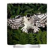 Downy Woodpecker In Flight Shower Curtain