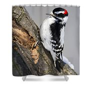 Downy Woodpecker Perched In A Tree Shower Curtain