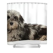Doxie-doodle Puppy Shower Curtain