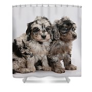 Doxie-doodle Pups Shower Curtain