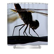 Dragon On The Wire Shower Curtain