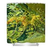 Dragon Seahorse Shower Curtain