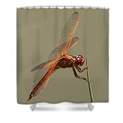 Dragonfly - Dodger Shower Curtain