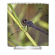 Dragonfly - Little Boy Blue Shower Curtain