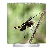 Dragonfly - Yellow Stripe Shower Curtain