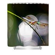 Dragonfly Dance Shower Curtain