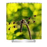 Dragonfly In Green Shower Curtain