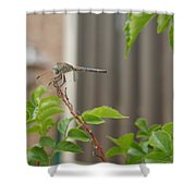 Dragonfly In Nature Shower Curtain