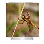 Dragonfly Looking At You Shower Curtain