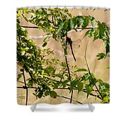 Dragonfly Lunch Shower Curtain