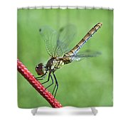 Dragonfly On A String Shower Curtain