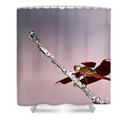 Dragonfly On A Pastel Sky Shower Curtain