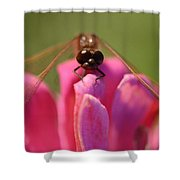 Dragonfly On Pink Flower Shower Curtain