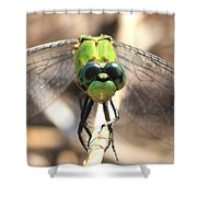 Dragonfly Perspective Shower Curtain by Carol Groenen