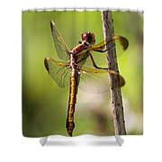 Dragonfly Photo - Yellow Dragon Shower Curtain