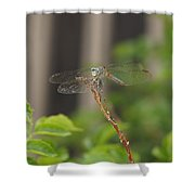 Dragonfly Smile Shower Curtain