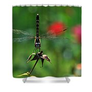 Dragonfly Summer Shower Curtain