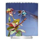 Dragonfly Visit Shower Curtain