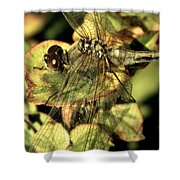 Dragonfly Wingspan Shower Curtain