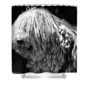 Dreadlock Dog Shower Curtain