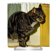 Dreaming Cat Shower Curtain
