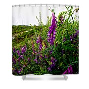 Dreaming Of Summer Shower Curtain