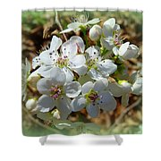 Dreams Of Pear Blossoms Shower Curtain