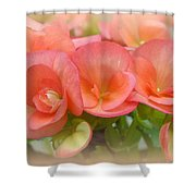 Dreamy Begonias Shower Curtain