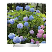 Dreamy Blue And Pink Hydrangeas Shower Curtain