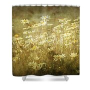 Dreamy Daises Shower Curtain