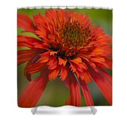 Dreamy Hot Papaya Coneflower Bloom Shower Curtain