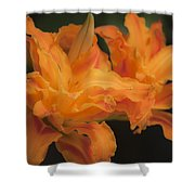 Dreamy Kwanso Daylily Pair Shower Curtain