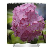 Dreamy Pink Mophead Hydrangea Squared Shower Curtain