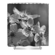 Dreamy Spring Blossoms In Black And White Shower Curtain
