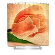 Dreamy Vintage Tulip Shower Curtain