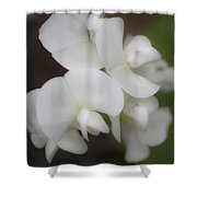 Dreamy White Sweet Pea Squared Shower Curtain