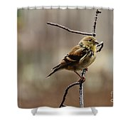 Drenched Finch Shower Curtain