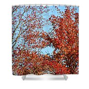 Dressed For Autumn Shower Curtain