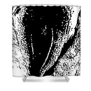 Dried Codfish Back B W Shower Curtain