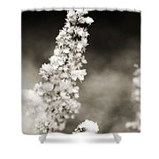 Dried Flower And Crystals 2 Shower Curtain