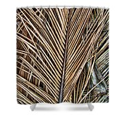 Dried Palm Fronds Shower Curtain