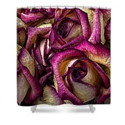 Dried Pink And White Roses Shower Curtain